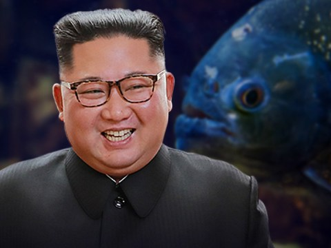 North Korean general executed by being thrown into piranha-filled fish tank