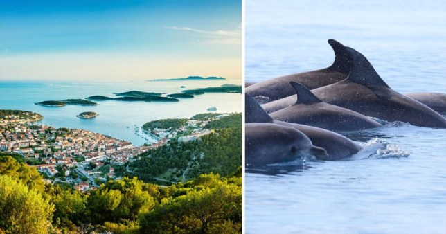The scholarship is based in Croatia and you can work with dolphins