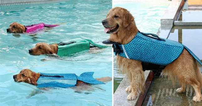 Compilation of a dog wearing a mermaid-shaped life jacket, and then three dogs swimming in the same kind of jacket in a pool