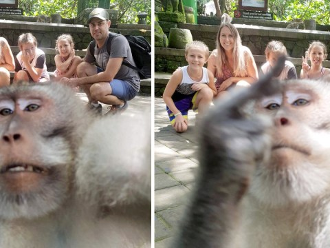 Monkey steals camera during family selfie and flips up his middle finger