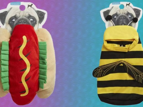 Primark launches range of pet outfits – including a unicorn, hotdog or a bee outfit