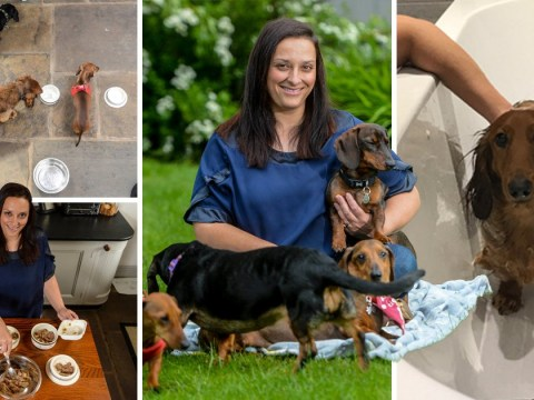 Woman opens luxury sausage dog hotel with beauty treatments and afternoon tea