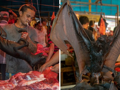 Dog meat and dead monkeys on sale in gruesome market in Indonesia