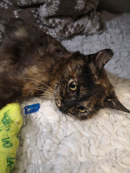 Kitten dumped after being 'sexually abused', burned and broken