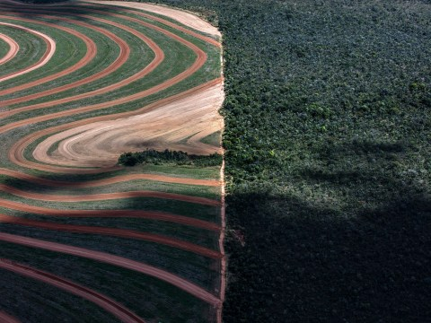 Forests twice the size of the UK destroyed for soy and palm oil production