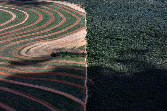 Undated handout photo issued by Greenpeace of a deforested area in Matopiba in Brazil as an area twice the size of the UK will have gone between 2010 and 2020 despite pledges by global brands to end deforestation, Greenpeace claims. PRESS ASSOCIATION Photo. Issue date: Tuesday June 11, 2019. In 2010 members of the Consumer Goods Forum, which include major global brands, committed to net-zero deforestation by 2020 though ?sustainable sourcing of key commodities including soy, palm oil, paper and pulp, and cattle. See PA story ENVIRONMENT Forests. Photo credit should read: Marizilda Cruppe/Greenpeace/PA Wire NOTE TO EDITORS: This handout photo may only be used in for editorial reporting purposes for the contemporaneous illustration of events, things or the people in the image or facts mentioned in the caption. Reuse of the picture may require further permission from the copyright holder.