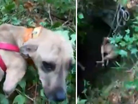 Grateful puppy wagged her tail after being rescued from cave after three weeks