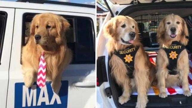 Max the dog, Mayor, Idyllwild, California