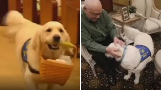 Bennie the therapy dog has been specially trained to fetch tissues and comfort grieving relatives at the funeral home where he works
