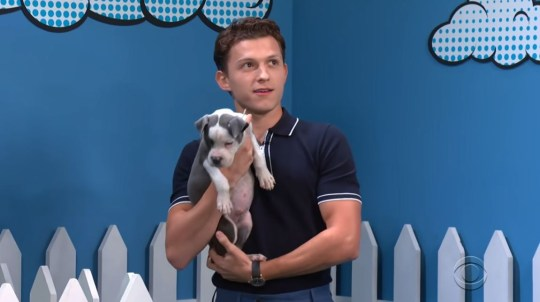 Tom Holland is flogging puppies on Stephen Colbert's The Late Show