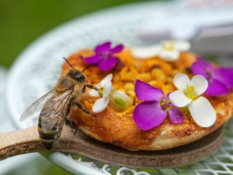 Papa John's creates tiny pizzas just for bees