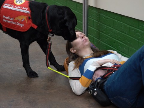 Dogs With Jobs: Meet the medical detection dogs giving chronically ill people back their lives