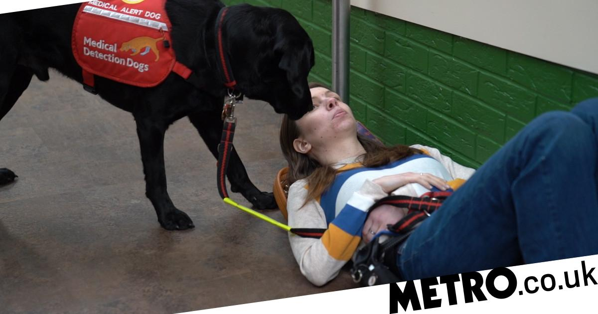 Dogs With Jobs: Meet the dogs giving chronically ill people back their lives