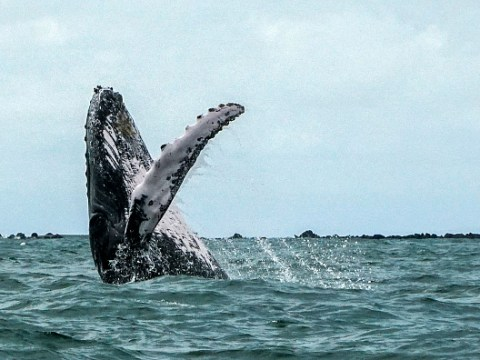 Japan's return to whaling after 30 years spells disaster for our planet