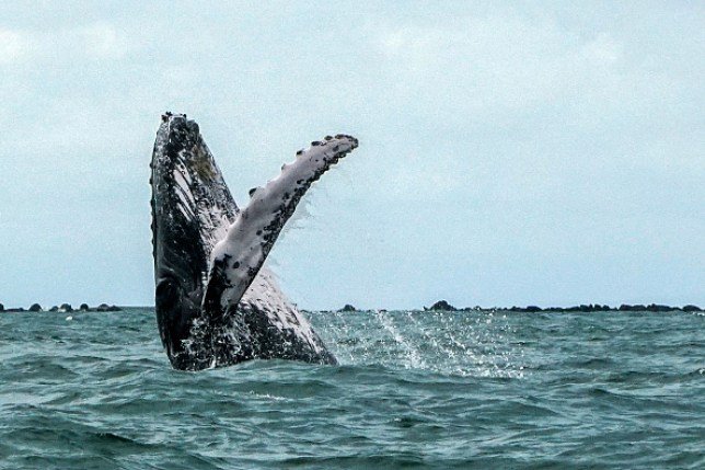 Whale in the Pacific Ocean
