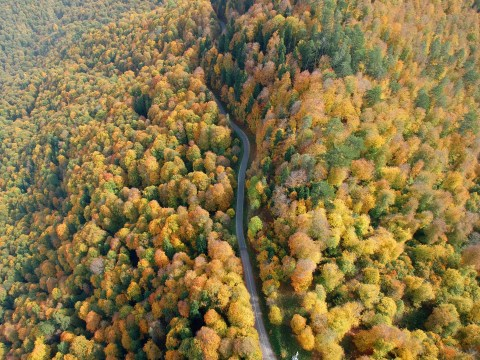 There is a simple way to slow climate change: plant more trees