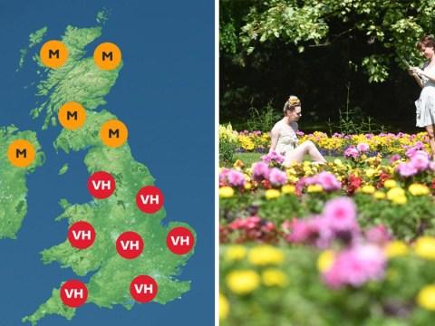 Pollen bomb to blast Britain as temperatures start to rise again