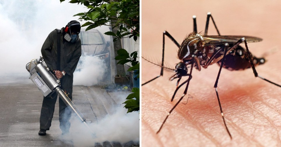 Picture of a Thai health officer carrying out defumigation work in Bangkok to get rid of mosquitos (left) next to picture of a mosquito on someone's skin