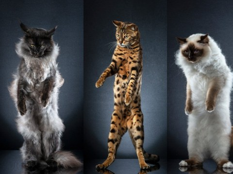 Photo series captures the wonder of cats standing on their back legs