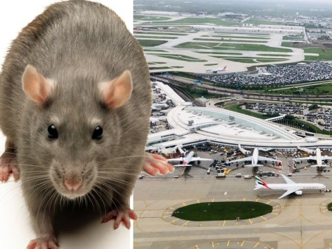 Plane passenger caught bringing 32lbs of rat meat into the US