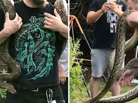 Massive 9ft python found up neighbour's tree five days after escaping