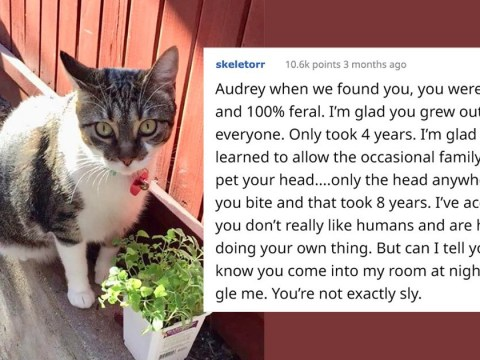 Woman writes letter to her 'unfriendly' cat to tell the world about her sweet side