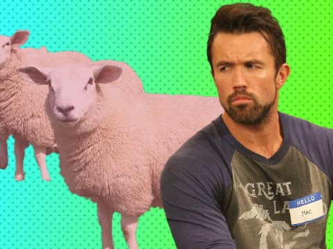 It's Always Sunny in Philadelphia's Rob McElhenney reveals real-life BTS chaos on Instagram as rogue sheep breaks free on set of season 14