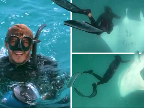 Giant manta ray 'asks snorkeller for help to save her life'