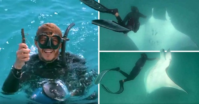 The diver helped out the manta ray