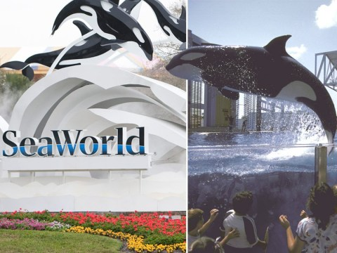 Virgin to stop selling SeaWorld trips over animal welfare issues