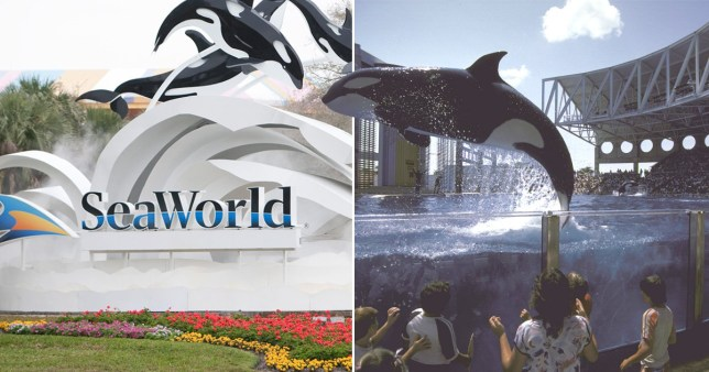 Picture of SeaWorld sign (left) next to picture of Orca/Killer whale jumping out of a tank