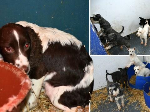 Puppy farm breeders 'burned dead dogs in a van'
