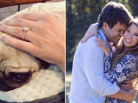 Bindi Irwin gets family pup Stella's bark of approval with adorable engagement ring photo