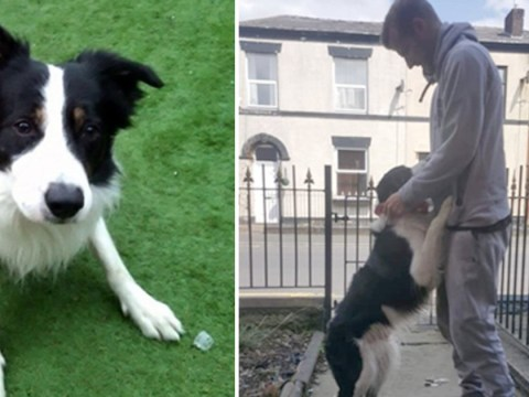 Man reunited with dog after police accidentally put him up for adoption