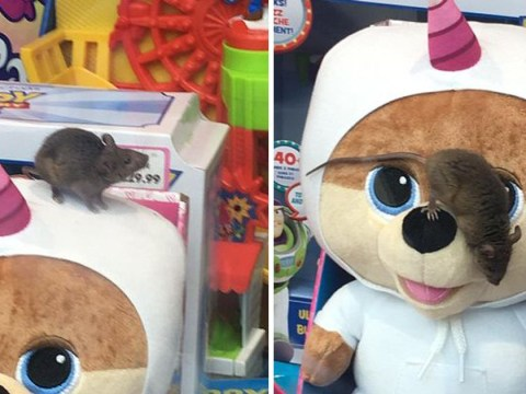 Horrified shoppers find mouse scurrying across toy display