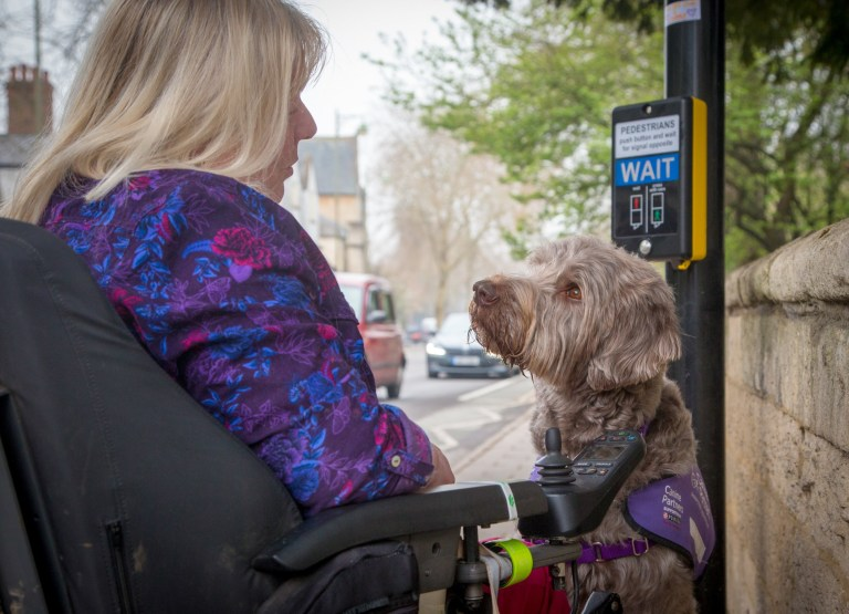 "Picture supplied by Melissa Baston /Kennel Club/Bav Media 07976 880732. The picture is called You?re safe with me and shows Labradoodle Quintus. It was taken by Melissa Baston from the UK and came third in the Assistance Dogs Charity category. A stunning picture of a dog surrounded by magnolia has come top in the annual Dog Photographer of the Year contest. The photo of rescue dog Merlin was chosen as the overall winner in The Kennel Club's international competition, which received almost 7,000 entries from more than 70 countries. Denise Czichocki, from Switzerland, who took the photo of her 14-year-old Podengo, said: ""I am really proud and overwhelmed, I still can't believe it! There are so many good photographers out there and I won this title, it is absolutely amazing. ""I have always loved to take pictures of everything, and my passion for dog photography started when I had my own, I wanted to create lovely memories of all of them. Over the years I have developed my photography to become more emotional."" The contest had 10 categories: Portrait, Man's Best Friend, Dogs At Play, Dogs At Work, Puppy, Oldies, I Love Dogs Because - for entrants aged between 12 and 17 years old - Young Pup Photographer - for entrants aged 11 and under - and Assistance Dogs and Rescue Dogs. SEE COPY CATCHLINE Winners of Dog Photo of Year comp"