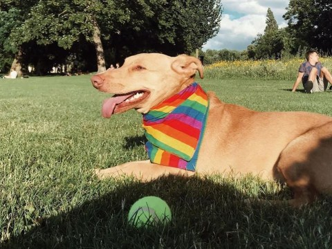 Pets of Pride: 13 animals in their rainbow kit
