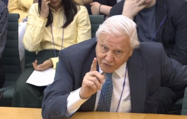 David Attenborough blasts 'silly squabbles about Brexit' saying UK is 'fed up' with EU