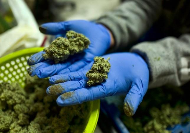 New York decriminalizes marijuana