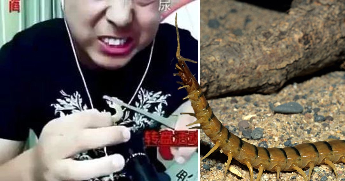A male in easterly China has died during a live-streaming event after eating unwholesome centipedes and geckos alive. The 35-year-old man, surnamed Sun, was found but critical signs in his prosaic in Hefei, Aunhui range on Saturday when his partner went to check in on him, according to Chinese reports. The man, who was a horde on DouYu, one of China's largest live-streaming platforms, had been filming himself celebration vast amounts of ethanol and eating centipedes, geckos and mealworms dual nights ago. His comment was followed by 15,000 people on DouYu and a male would horde live-stream sessions each night, according to Xinan Evening News.