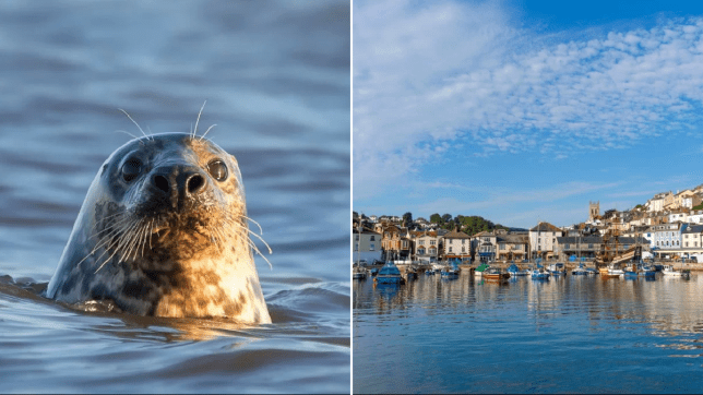 Man attacked by seal while swimming off Devon coast