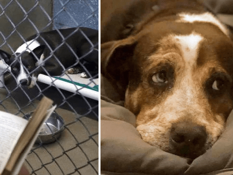 Prisoners will spend July 4 comforting abandoned dogs during firework displays