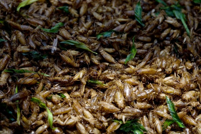 crickets rich in antioxidants