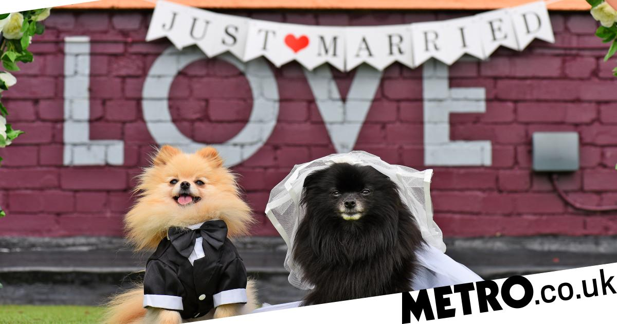 You can now win a rooftop wedding for your dog