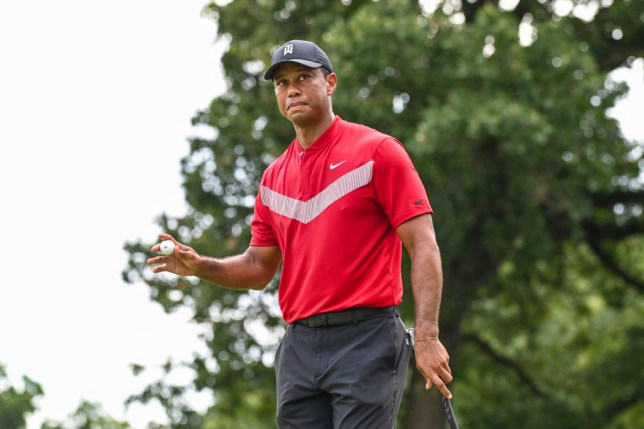 Tiger Woods expects to return to golf in October
