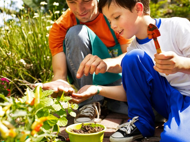 Little boy planting seeds with adult in a garden