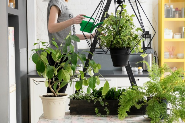 A woman watering her houseplants