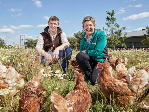 Morrisons opens bee-friendly farms to protect the bee population