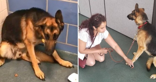 Terrified dog dumped at shelter because owners were expecting a baby