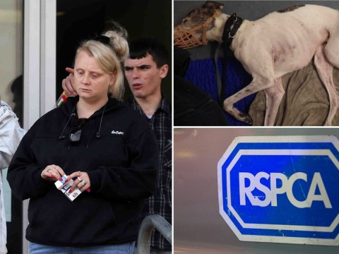 Dog put down after neglectful owners refused to treat broken leg